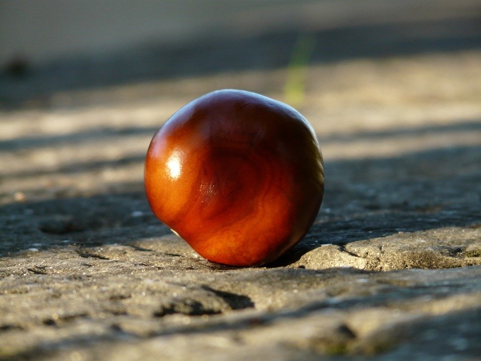 Chestnut on a stone surface