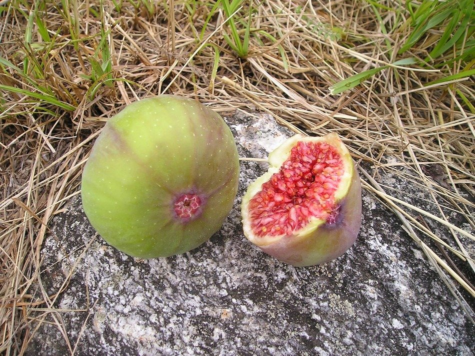 ripe figs on dry grass