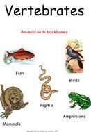 Clip art of Vertebrate Animals