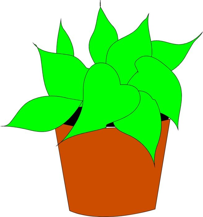 House Plant Clip Art drawing