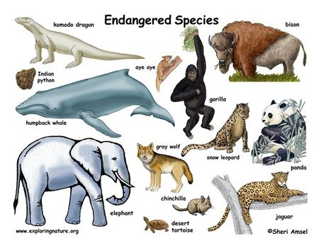 endangered species of india Thank you for taking the time to provide feedback on the iucn red list of threatened species website, we are grateful for your input.