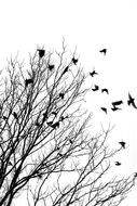 Black And White Tree With Birds drawing