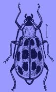 Black And White Beetle Drawing A Of