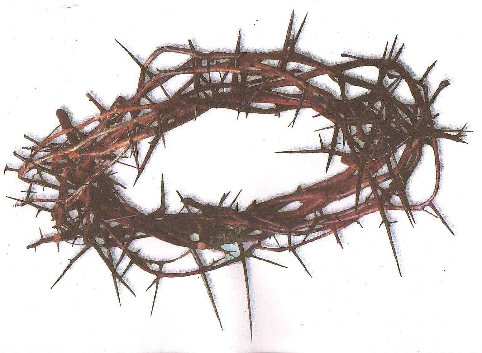 how to make a real crown of thorns