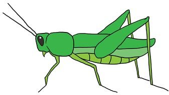 Grasshopper Cartoon Drawing