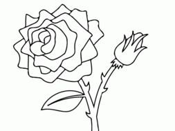 rose with buds as a graphic illustration