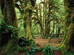 Landscape of beautiful forest in Washington State Olympic National Park
