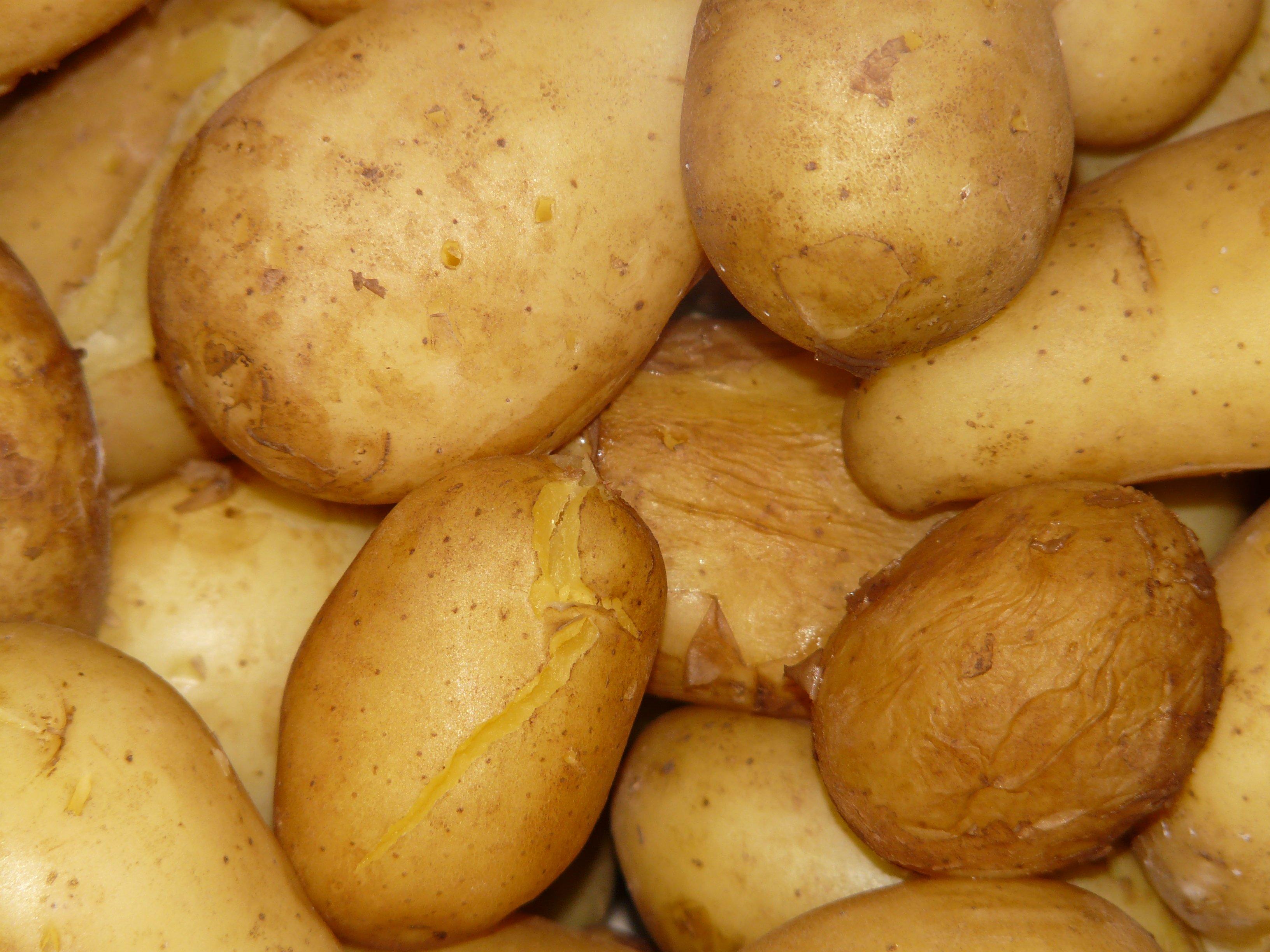 Creamy Au Gratin Potatoes Recipe  Allrecipescom
