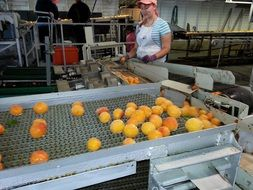 produce food canning processing