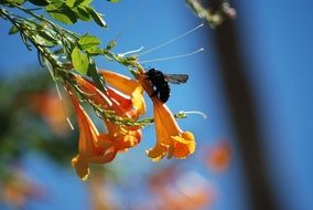 bee on an orange flower in a botanical garden