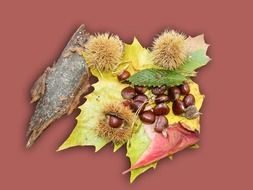 sweet chestnuts in decorating