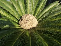 exotic palm