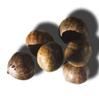 isolated sweet chestnuts