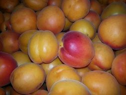 apricots are healthy fruits