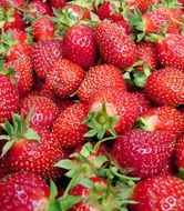 ripe strawberries with tails