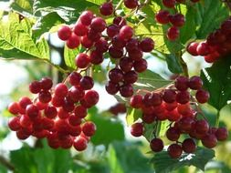 appetizing berries red