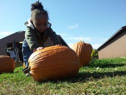 girl is rolling an orange pumpkin at the farm