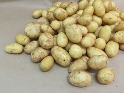 A lot of the young potatoes