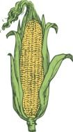 painted yellow corn cob