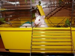 little white mice in a yellow cage