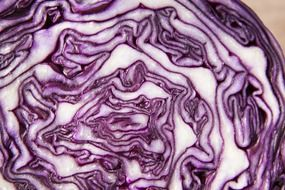 healthy red cabbage