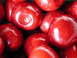 delicious red ripe cherries
