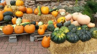 various pumpkins in pile outdoor