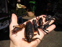 fried insects on hand, cambodian cuisine