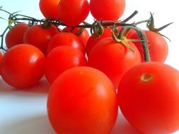 fresh ripe tomatoes on branch