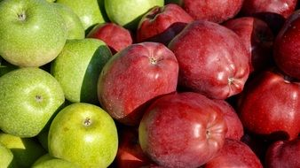 harvested red and green apples