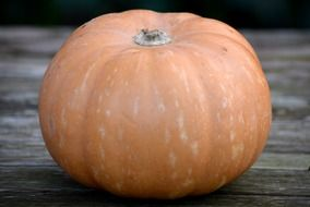 pumpkin vegetable autumn orange