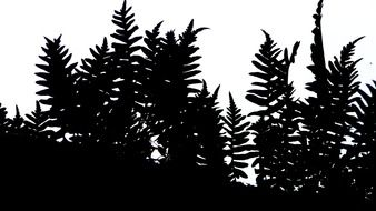 graphic image of a black silhouette of a fern