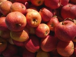 ripe red apples closeup