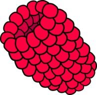 Fresh raspberry clipart