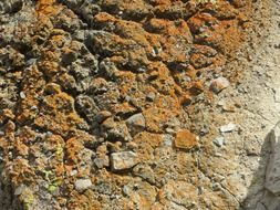 rock lichen cliff