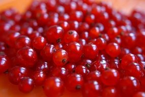 pile of fresh red currant, ripe berry close up
