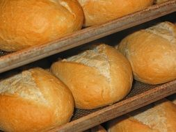 fresh white loaves in a bakery