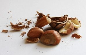 Crashed hazelnuts
