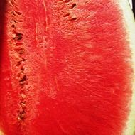 red watermelon in the summer