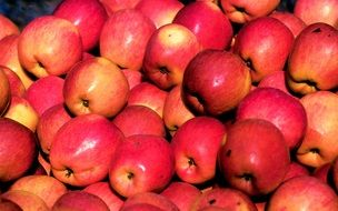 many ripe pink apples