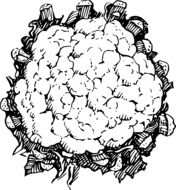 cauliflower leafy drawing
