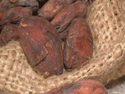 cocoa beans close-up