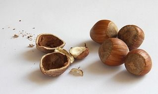 brown hazelnuts and shells