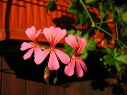 flower with pink petals on a stalk on the roof