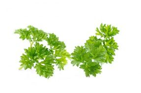 bright green parsley leaves