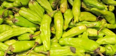 harvest of green chili peppers