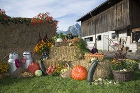 harvest festival at the farm