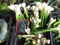 leek, spring onion at market