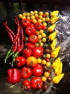 Harvest of different varities of peppers and tomatoes