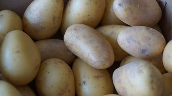 closeup of young fresh potatoes
